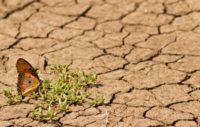 Cop24, Banque mondiale, pays en développement, migrants climatiques
